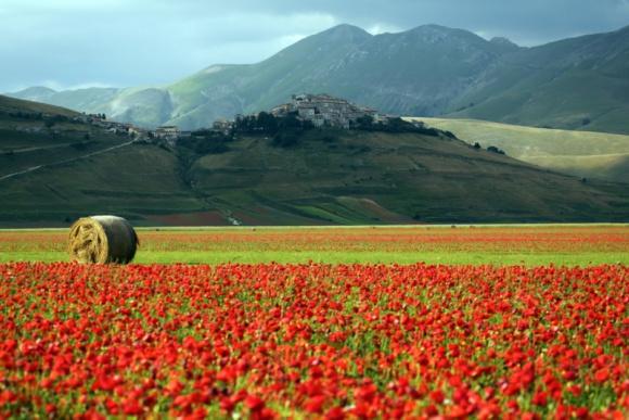 Ekologiczne składniki produktów KEMON ze zjawiskowych upraw we Włoszech