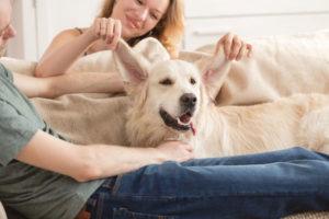 Czy COVID-19 wpłynął na nasze relacje ze zwierzętami?