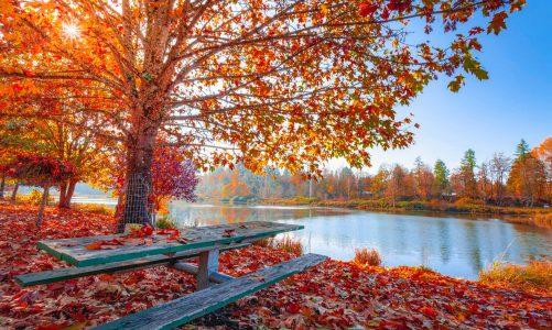Alergie, przeziębienia, grypa: jak najlepiej przygotować się na jesienny sezon chorobowy?
